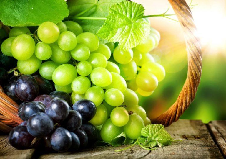 Праздник сбора винограда
