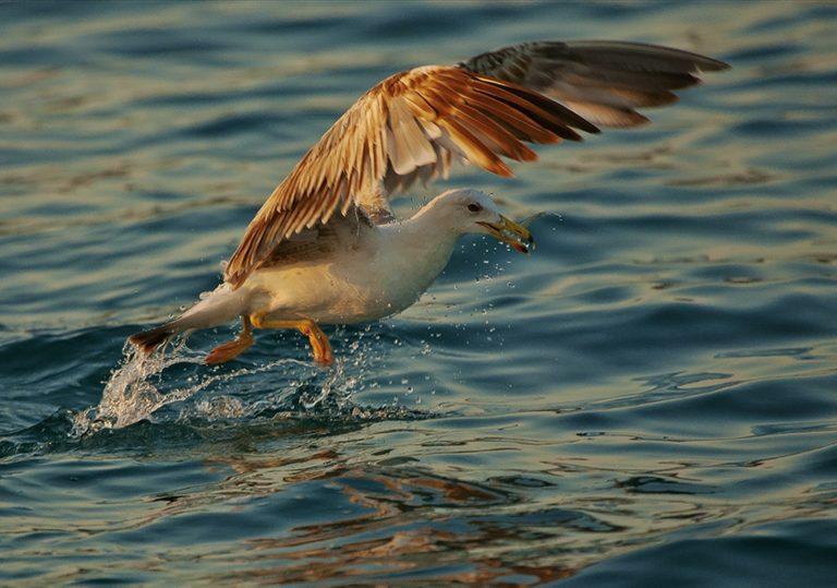 Приглашаем принять участие в фотоконкурсе «Звезда рыбака»