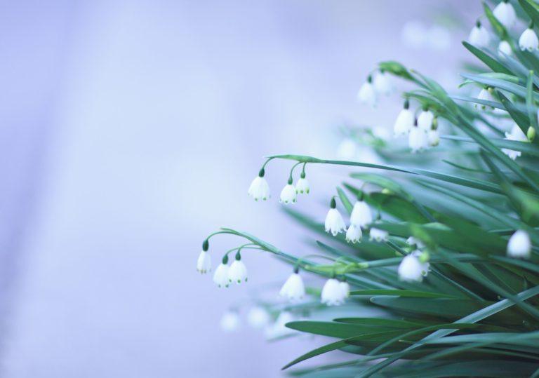29 февраля — Мастер-класс «Весна идёт, весне дорогу!», создаём оригинальную открытку